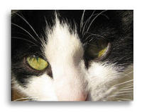 Fundtier Katze